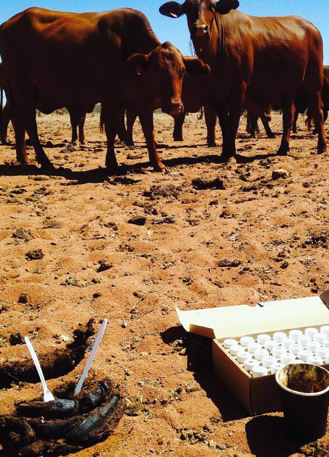 Select Carbon are partnering with the University of Western Australia (UWA) and Meat and Livestock Australia (MLA) to bring you a research project that will be carried out in the Southern Rangelands of WA