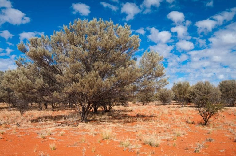 western rangelands carbon regeneration project